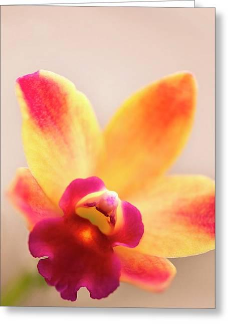 Sophrolaeliocattleya Orchid Greeting Card by Maria Mosolova