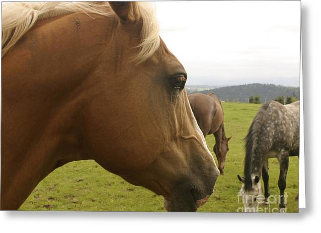 Greeting Card featuring the photograph Sorrel Horse Profile by Belinda Greb