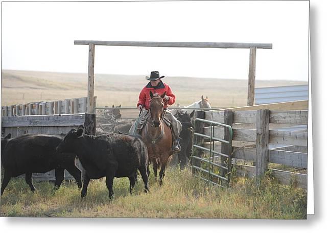 Sorting Heifers Greeting Card by Lee Raine