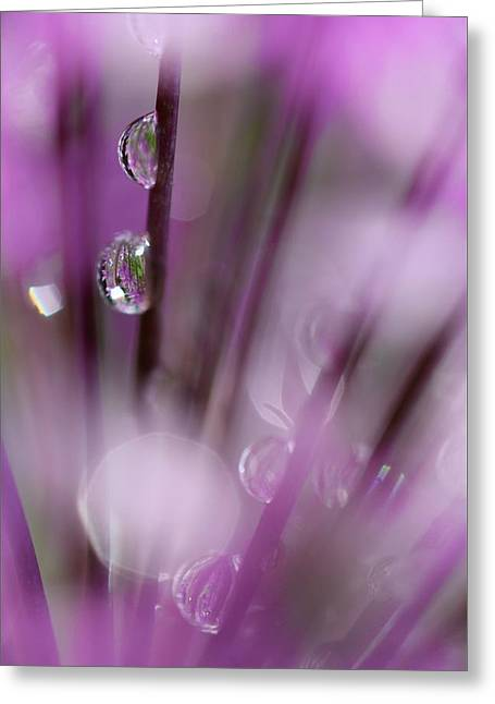 Soul In Rain Greeting Card by Tracy Male
