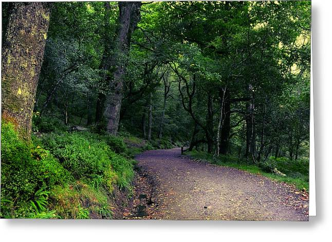 Soul Journey. Glendalough. Ireland Greeting Card by Jenny Rainbow