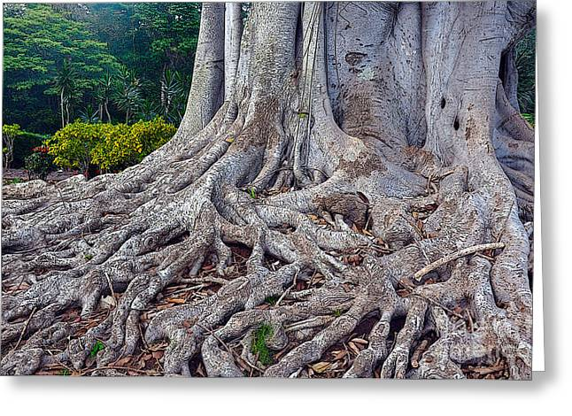 Greeting Card featuring the photograph Soul Roots by Gina Savage