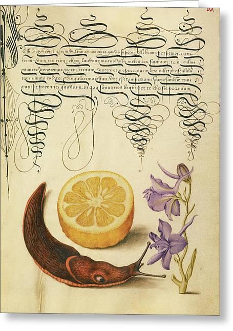 Sour Orange, Terrestrial Mollusk, And Larkspur Joris Greeting Card by Litz Collection