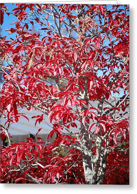 Sour Wood Red - Tree Leaves Greeting Card