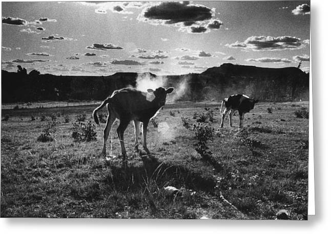 South Africa 1993 Greeting Card by Rolf Ashby