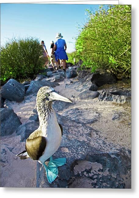 South America, Ecuador, Galapagos Greeting Card by Miva Stock