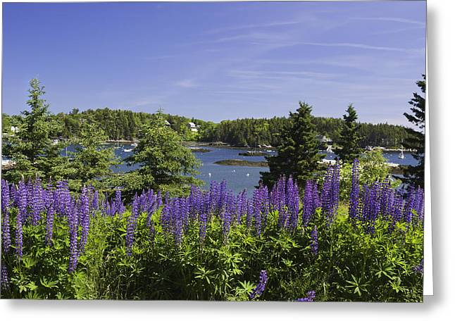 South Bristol And Lupine Flowers On The Coast Of Maine Greeting Card by Keith Webber Jr