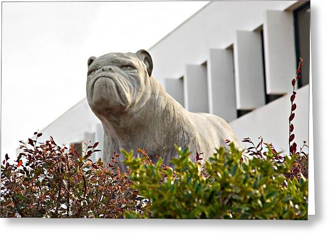 South Carolina State University Bulldog Greeting Card