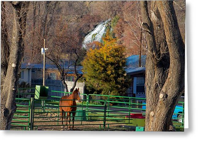 Greeting Card featuring the photograph South Central Idaho Life by Michael Rogers