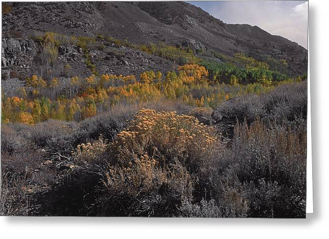 South Fork Valley Gold Greeting Card
