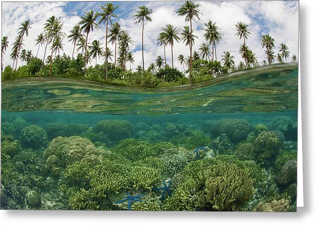 South Pacific, Solomon Islands Greeting Card by Jaynes Gallery