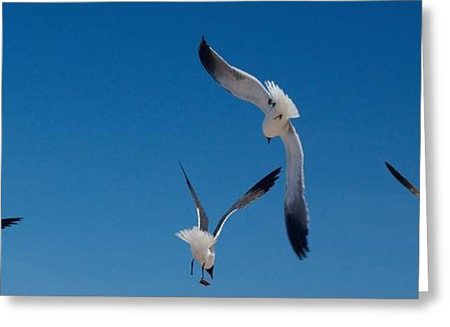South Padre Seagull Dance Greeting Card by Bonita Hensley