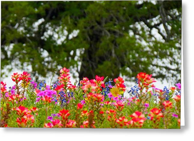 South Texas Blend Greeting Card