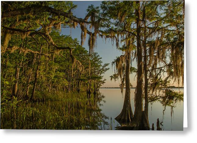 Southern Beauty  Greeting Card