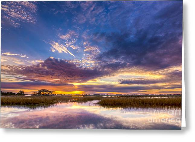 Southern Beauty Greeting Card by Matthew Trudeau