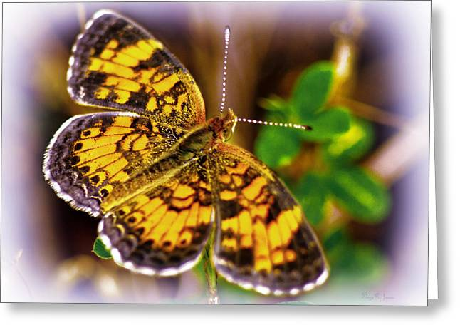 Southern Butterfly Greeting Card by Barry Jones