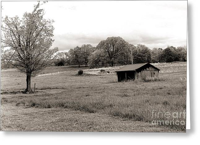 Southern Bw Greeting Card by Chuck Kuhn