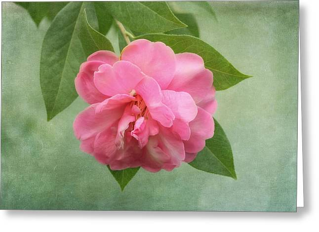Southern Camellia Flower Greeting Card