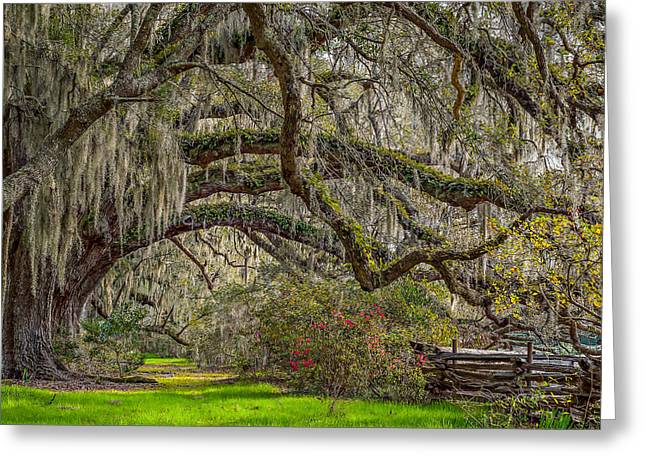 Southern Charm Greeting Card by Steve DuPree