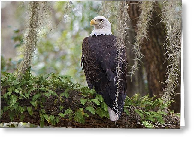 Southern Eagle Greeting Card