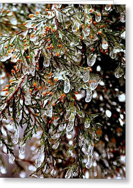 Southern Ice Tree Greeting Card by Lisa Wooten