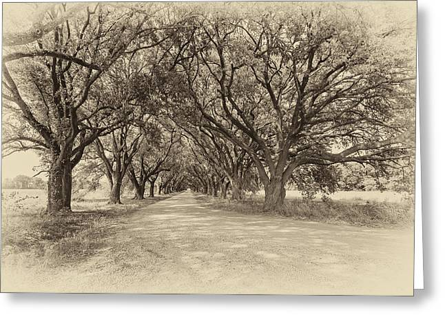 Southern Journey Sepia Greeting Card by Steve Harrington