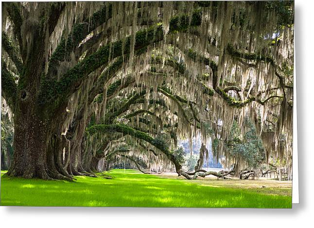 Southern Oaks Greeting Card