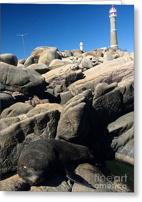 Southern Sea Lion And Lighthouse Greeting Card