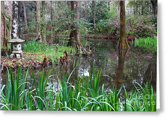 Southern Serenity Greeting Card by Carol Groenen