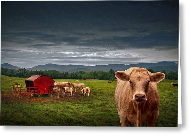 Southern Steer Greeting Card by William Schmid