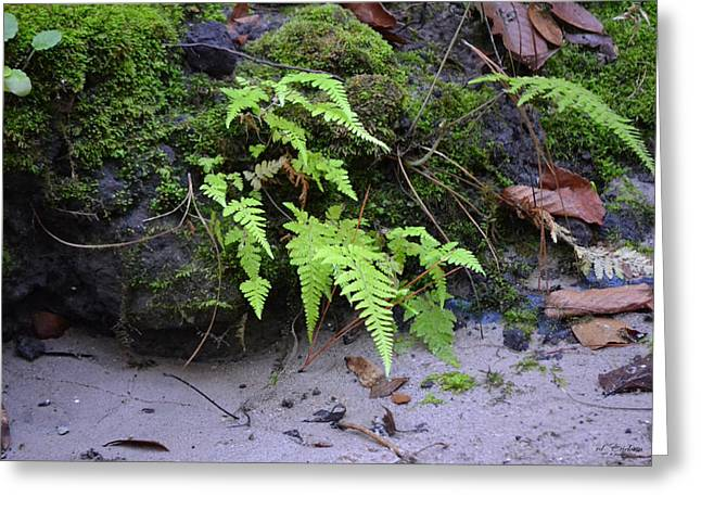 Southern Wood Ferns Plants Photograph By Rd Erickson