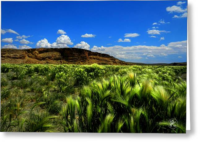 Southern Wyoming 005 Greeting Card by Lance Vaughn