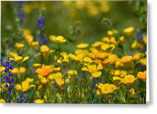 Southwest Wildflowers  Greeting Card by Saija  Lehtonen