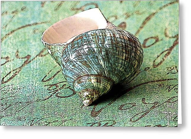 Souvenir Shell Greeting Card by Karen Stephenson