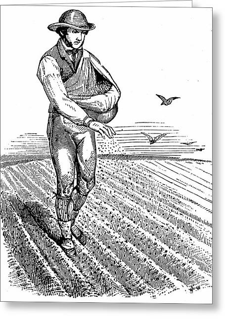 Sowing Seed Broadcast Greeting Card by Universal History Archive/uig