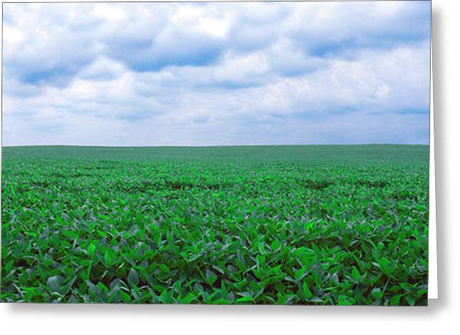 Soybean Field, Coles, Philo, Urbana Greeting Card by Panoramic Images