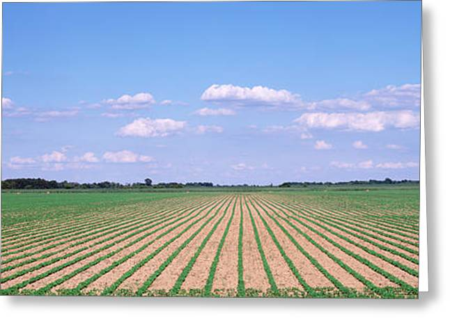 Soybean Field In A Landscape, Marion Greeting Card by Panoramic Images