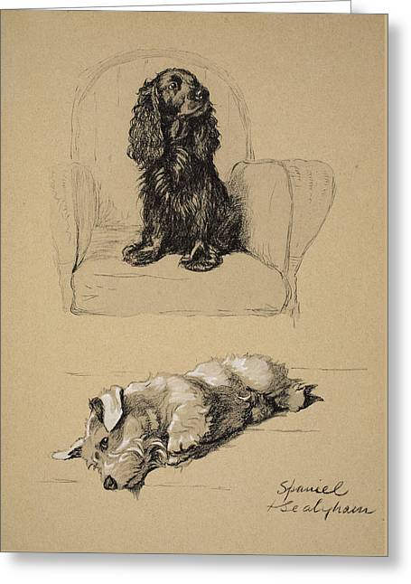 Spaniel And Sealyham, 1930 Greeting Card by Cecil Charles Windsor Aldin