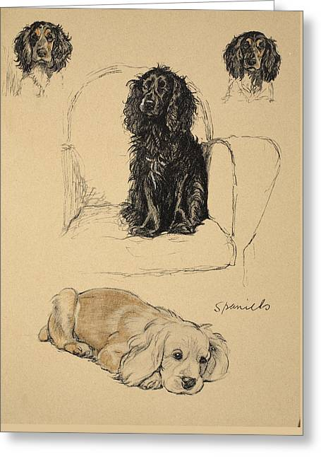 Spaniels, 1930, Illustrations Greeting Card