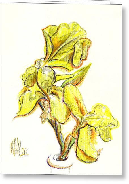 Spanish Irises Greeting Card