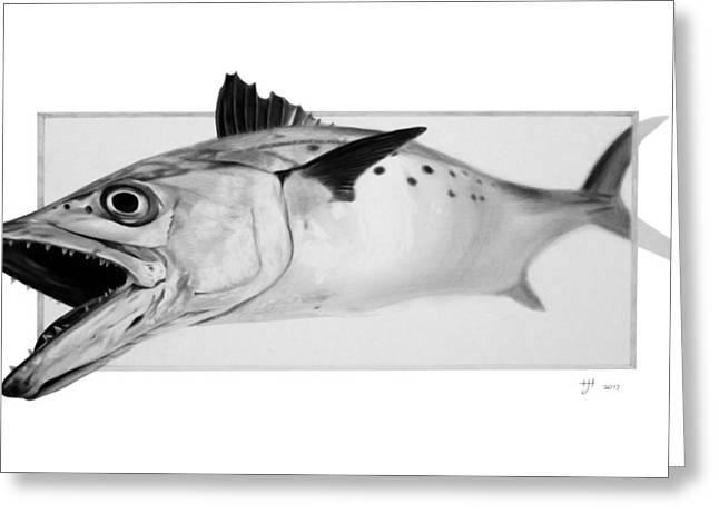 Spanish Mackerel - Pencil Greeting Card