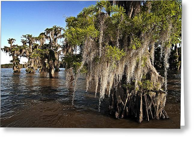 Greeting Card featuring the photograph Spanish Moss by Andy Crawford