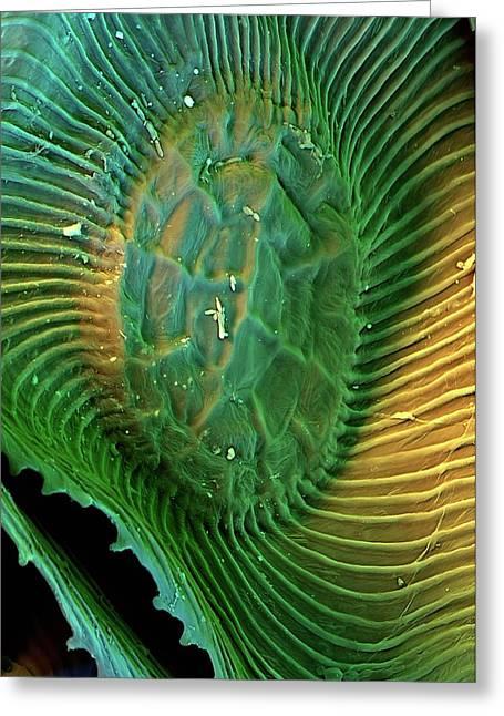 Spanish Moss Leaf Greeting Card