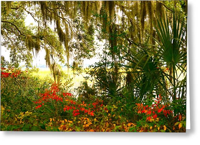 Spanish Moss Of Beaufort 1 Greeting Card