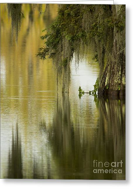 Spanish Moss Reflections Greeting Card by Kelly Morvant