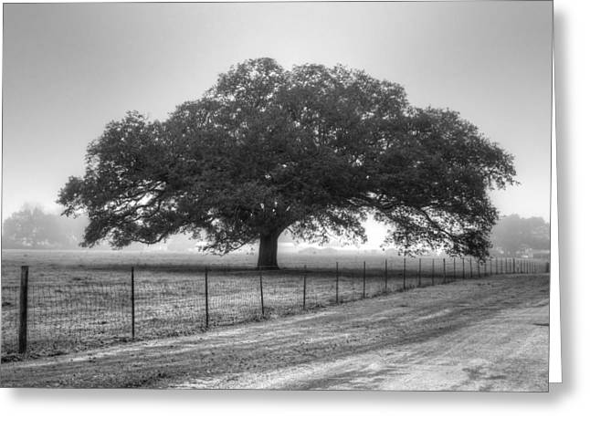 Spanish Oak Black And White Greeting Card