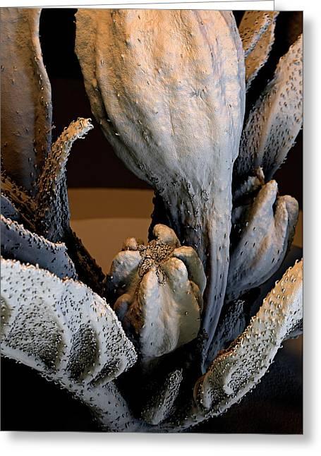 Spanish Pepper Flower Greeting Card by Stefan Diller