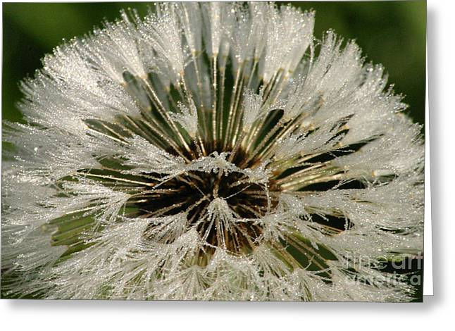 Sparkling Dandelion Greeting Card by Tayt Dame
