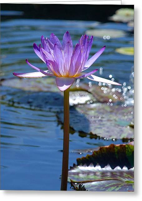 Sparkling Purple Water Lily Greeting Card