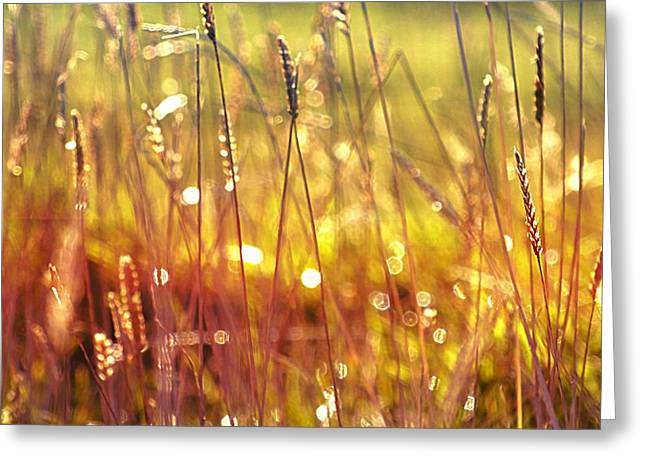 Sparkling Wet Grass In The Sunlight Greeting Card by Anne Macdonald